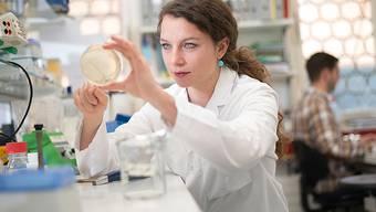 Forschender Blick auf die Petrischale: Ist die Zellkultur erfolgreich? Ist das Labor erfolgreich? Und später die Firma?