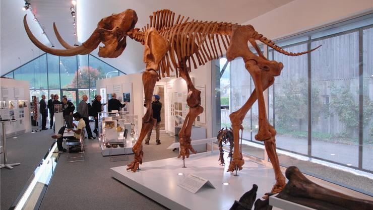 Blick ins Museum in Niederweningen, mit dem grossen und dem kleinen Mammutskelett.