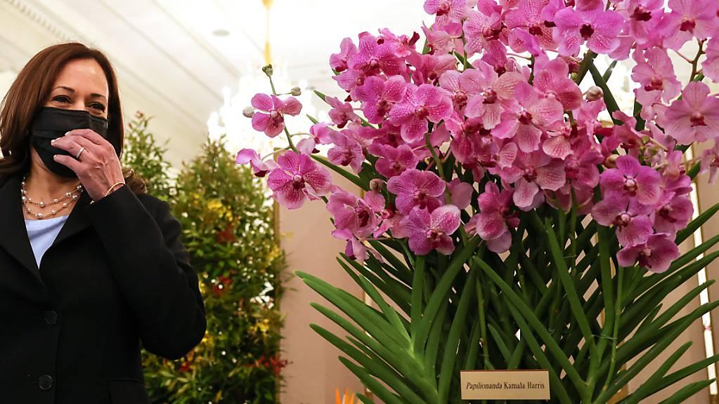 Kamala Harris, US-Vizepräsidentin, steht neben Papilionanda Kamala Harris während einer Orchideentaufe.