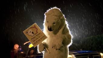Eisbär Paul besucht Shell-CEO Peter Voser in Widen