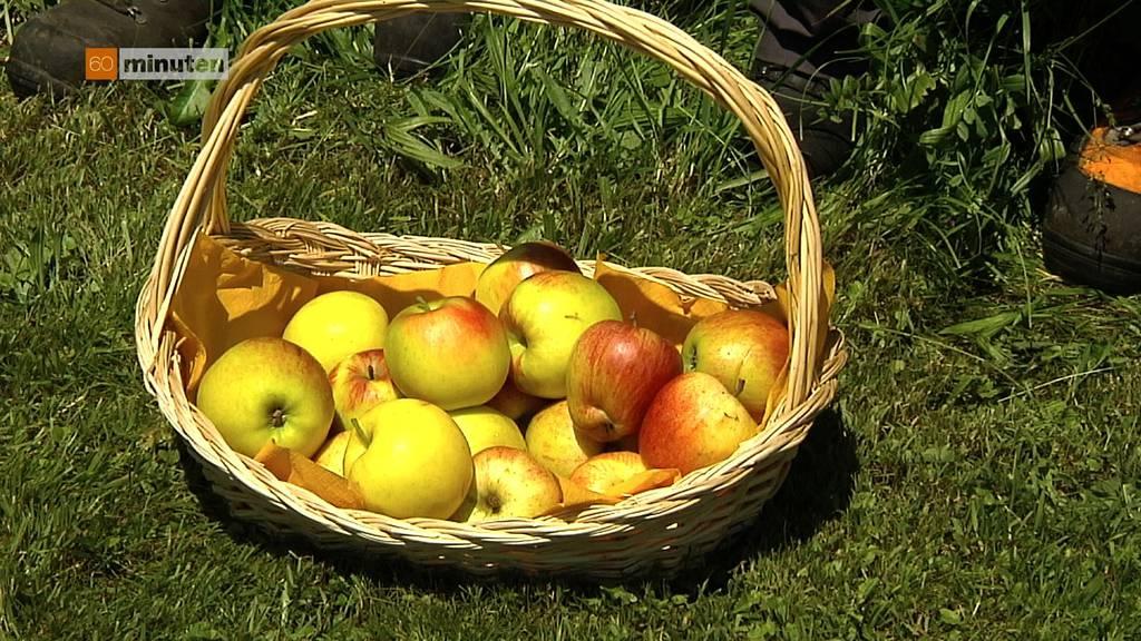 Apfelsammler