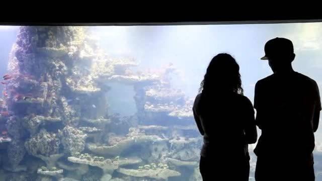 Ein Blick ins neue Aquarium: Hier leben Pinguine und unzählige Fische