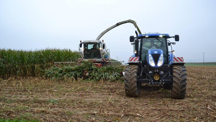 Die Ernte auf dem Ruckfeld ist in vollem Gange