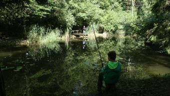 Beim «Schnupperfischen» können einheimische Fische geangelt werden.ZVG
