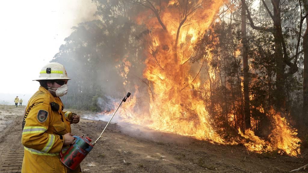 Experte: Brände töten eine Milliarde Tiere