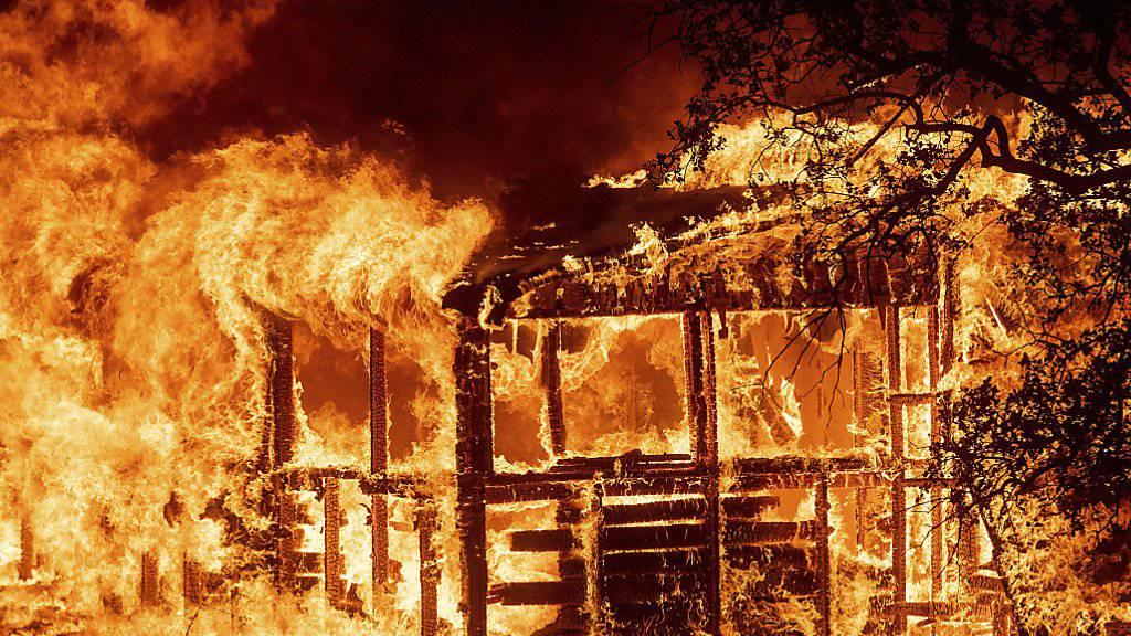 Waldbrände zerstören 500 Häuser