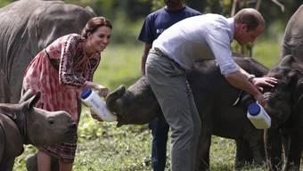 Prinz William und seine Frau Kate geben jungen Elefanten den Schoppen