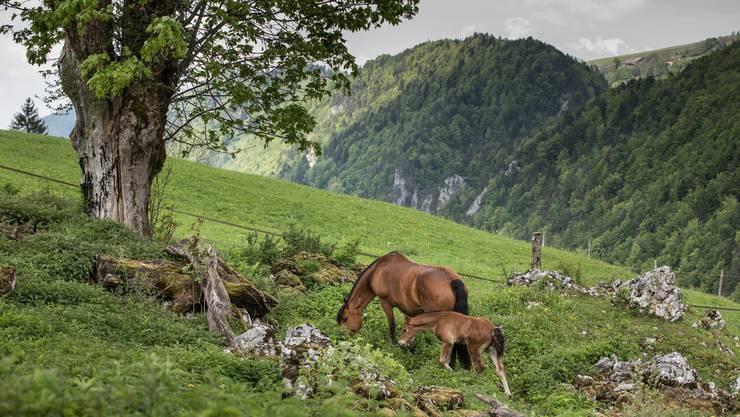 Wie aus dem Bilderbuch: So schön ist der Naturpark Thal.