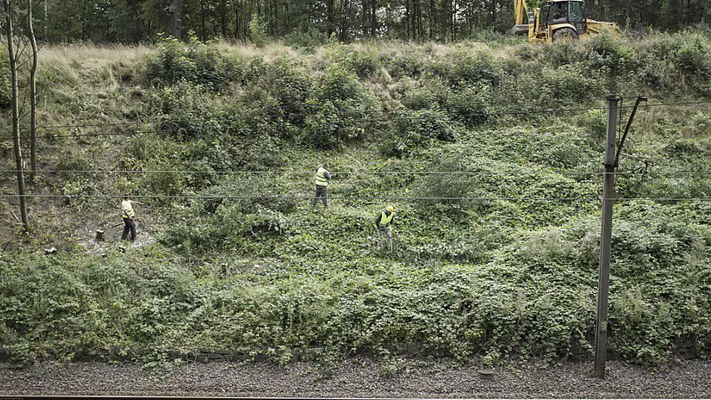 Grabungen nach mysteriösem Nazi-Zug in Polen gestartet