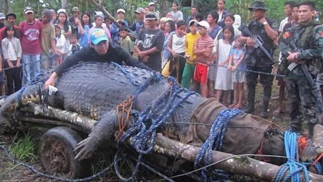 Auf den Philippinen sollen Jäger das bislang grösste Krokodil der Welt gefangen haben