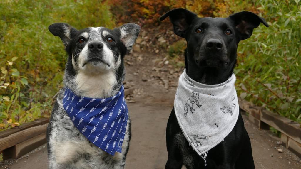 Droht nun die Rückgabe der «Pandemie-Hunde»?