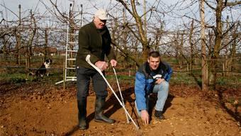 Sie sind wieder fündig geworden: Alfred und Daniel Loosli in der Kirschbaumplantage des Zassehaldehofes. (Archiv)