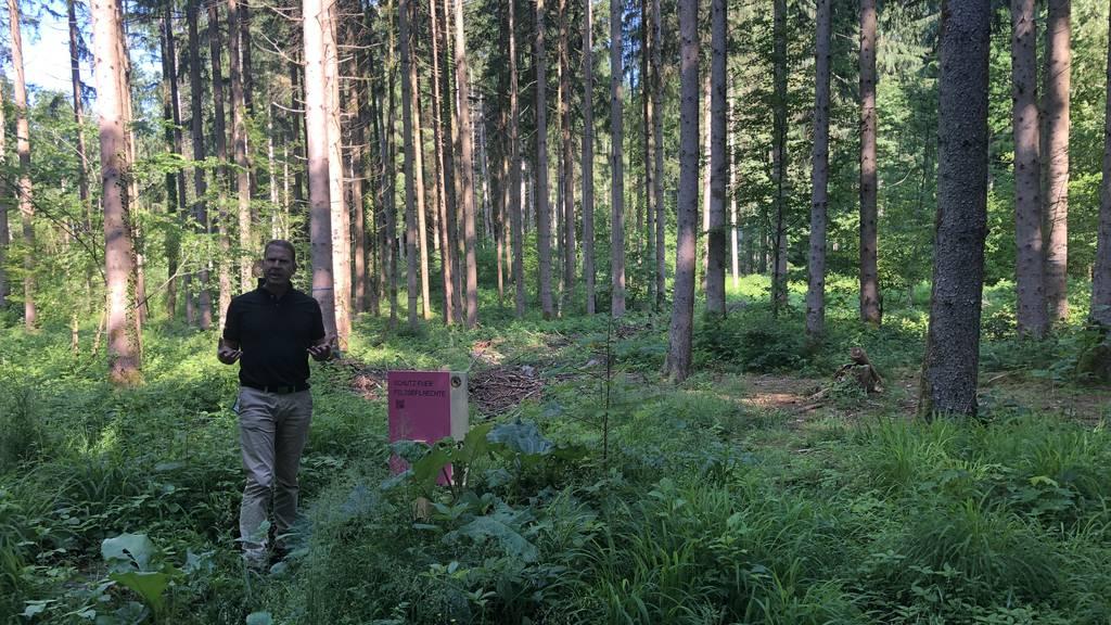 Corona veränderte die Waldbesuche der Berner