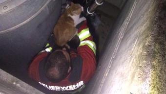 Nach 26 Stunden konnte die Feuerwehr Katzendame Lia aus einem Schacht befreien. Herrchen Philipp Wildi aus Unterkulm ist überglücklich.