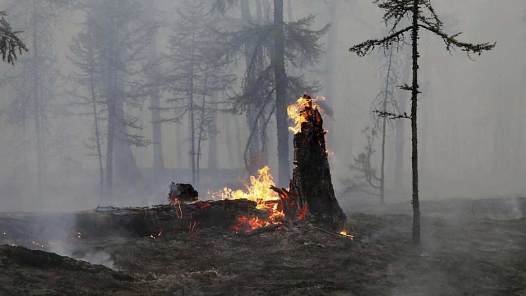 Der Ort eines Waldbrandes, auf dem ein Baumstamm in Flammen steht. Die russischen Behörden haben den Ausnahmezustand in Nordostsibirien ausgeweitet, um externe Ressourcen zur Bekämpfung der Waldbrände in der riesigen Region heranzuziehen.