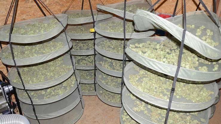 Die ganzen Drogen wurden beschlagnahmt.