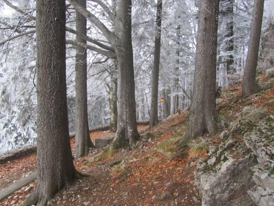 Am höchsten Punkt des Kantons Basel-Land. Hinteri-Egg 1`169 m ü.Meer. Rastplatz mit voradventlicher November-Stimmung mit leichtem Frost vom letzten Samstag den 17.Nov. 2018.