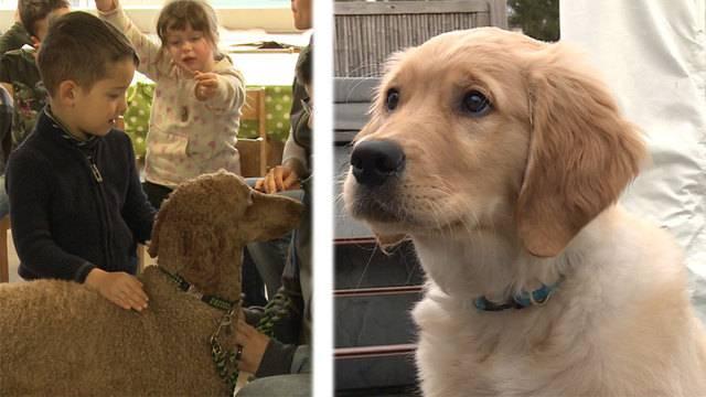 Vom Tierheimhund zum Therapiehund  /  Ein Welpe zieht ein