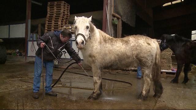 Mittelloser Vermieter weiterhin zur Pferdepflege verpflichtet