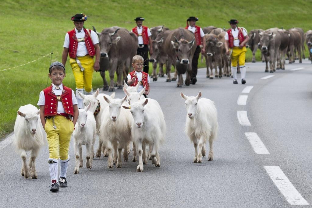 Alpabfahrt in Appenzell Ausserrhoden (© KEYSTONE/Ennio Leanza)