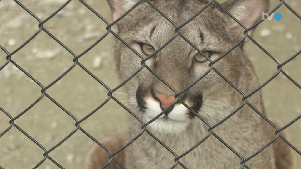 «Freuen uns ausserordentlich» – Zoos bereiten sich auf Öffnung vor