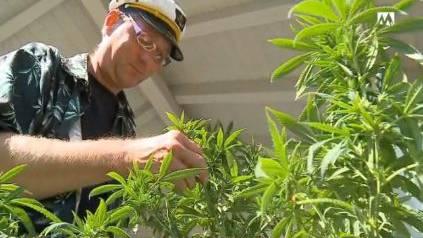 Pius Lischer züchtet Cannabis-Pflanzen und raucht diese dann auch. Die Grossratskandidierenden haben dafür viel Verständnis.