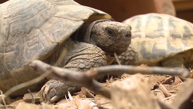 Schildkröten-Auffangstation überquillt