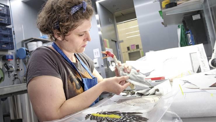 Tandra Fairbanks arbeitet hier an einem Dinosaurier: Sie bildet einen Archaeopteryx nach. Es handelt sich um ihr persönliches Modellbauprojekt.