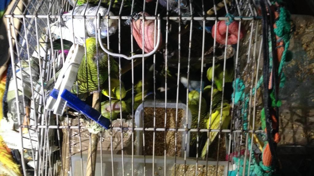 In diesem Käfig waren bis zu 40 Tiere.