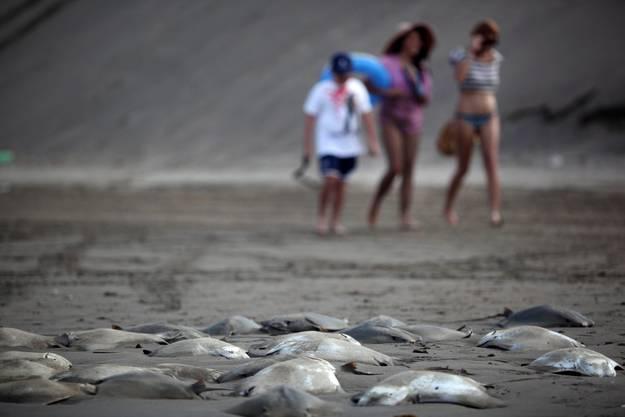 An der Küste von Chachalacas, einem beliebten Strand für Touristen, würden über 350 Mantas tot angespült.