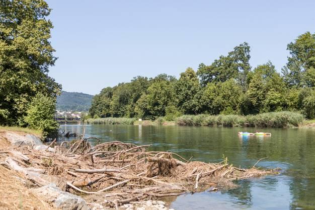 Die sogenannten Raubäume, die im Ufer befestigt sind und die sechs Meter ins Wasser ragen, bieten Fischen wertvollen Unterschlupf.