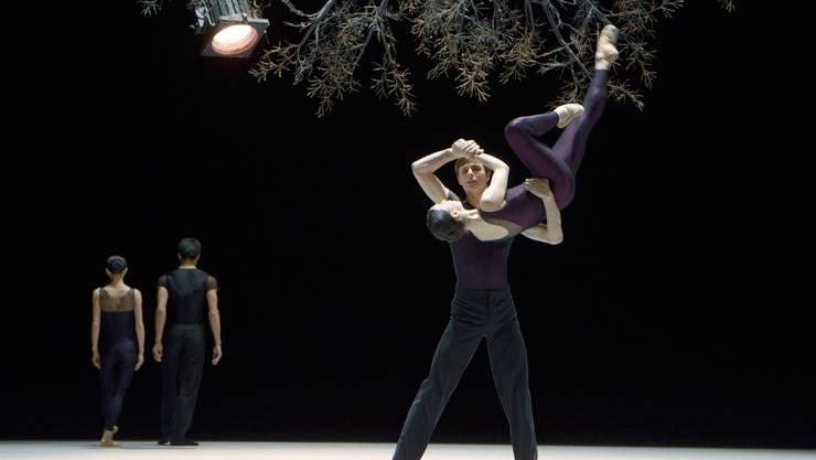 Ein Scheinwerfer umkreist den Baum und die Tänzerinnen und Tänzer in Jirí Kyliáns Choreografie «Wings of Wax». Bettina Stöss