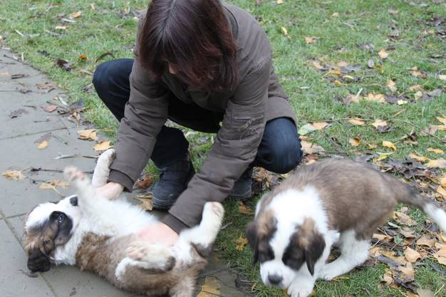 Die Bernhardiner Hündin Gianna als sie noch klein war mit ihrer Besitzerin Gaby Albicker.