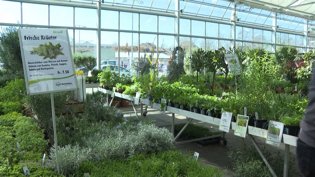 Ab in die Gärten: Gartenexperten über die neusten Trends