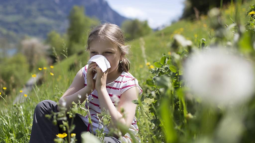 Vor allem die Gräserpollen sorgten in diesem Jahr für allergische Reaktionen wie Heuschnupfen. (Symbolbild)