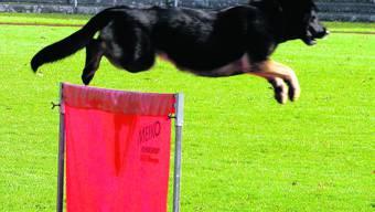 Souverän: Als ob das nichts wäre, springt der Hund über das Hindernis. (uam)