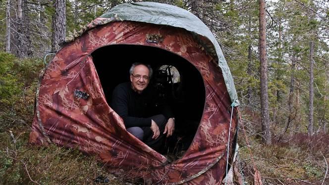 In Nordnorwegen wartet Rudolf Hug in einem gut getarnten Zelt auf die Auerhähne.  Rudolf Hug