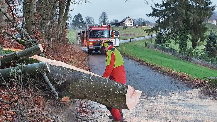 Die Feuerwehr Bremgarten musste wegen des Sturms Petra mehrere Bäume wegräumen, wie hier im Ortsteil Hermetschwil-Staffeln.