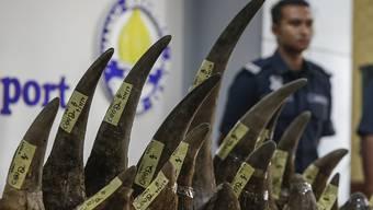 Malaysische Zollfahnder präsentieren 18 Nashorn-Hörner, die sie am Flughafen von Kuala Lumpur beschlagnahmt haben.