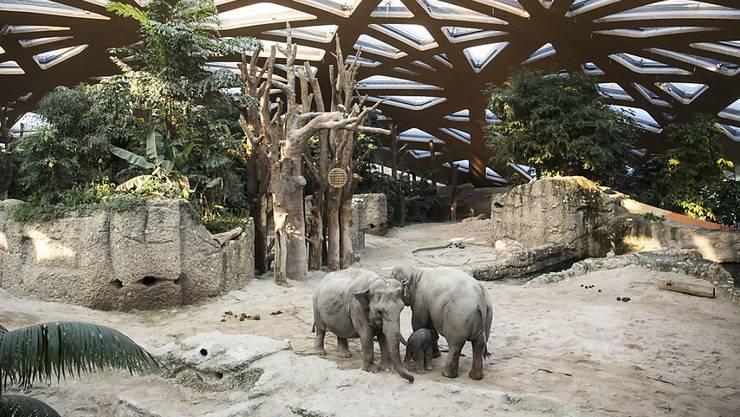 Seit dem Umzug in die neue Anlage gebären die Elefanten im Zoo Zürich ihre Jungtiere ohne menschliche Einwirkung. (Archivbild)