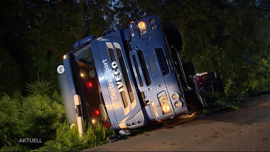 «Säuli-Transporter» gekippt: 6 Tiere sterben bei Unfall in Fahrwangen