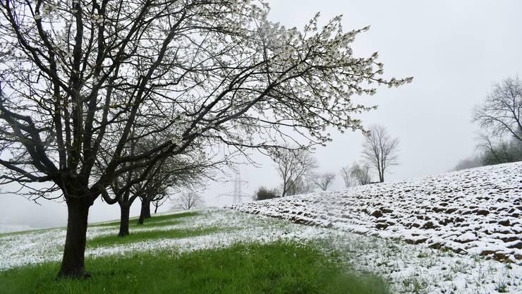 Nach milden Wintern kann Frühlingsfrost besonders verheerend sein.