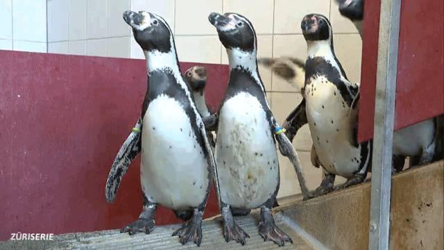 De Pingu gaht in Chinderzoo Folge 3