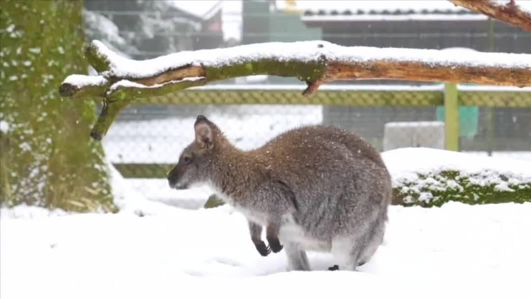 Pünktlicher Winterbeginn mit Schnee im Mittelland