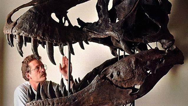 Gewaltige Bisskraft: Der Kopf eines Tyrannosaurus Rex (Symbolbild)