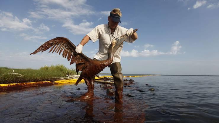 Ein Helfer hebt einen mit Öl überdeckten Pelikan aus dem Wasser.