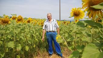 innovativ Oskar Urech eröffnete auf seinem Haldenhof den ersten Sonnenblumen-Irrgarten.irena jurinak