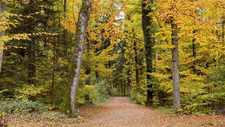 Hier herrscht Biovielfalt: Wald in Unterentfelden.