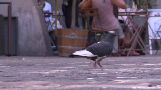 Wie viele Tauben hat es in Bern?