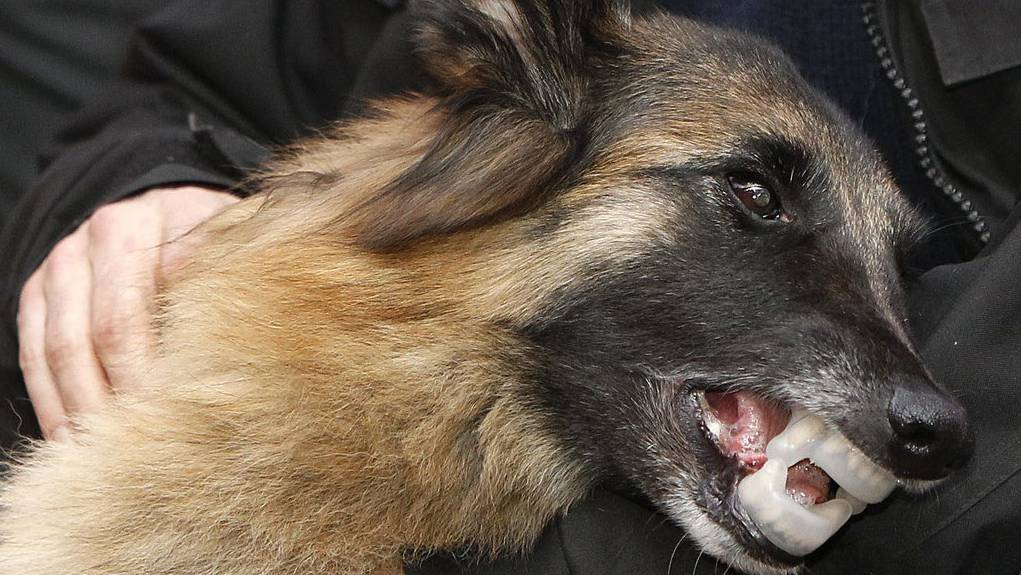 Tragisch: Tierhalterin wird von eigenem Hund totgebissen (Themenbild).